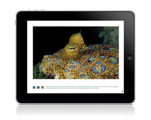 Fernando de Noronha iPad app