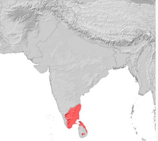 Tamil speakers reside primarily in south India and Sri Lanka.