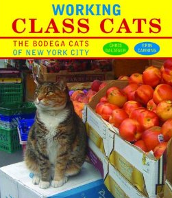 workingclasscats2