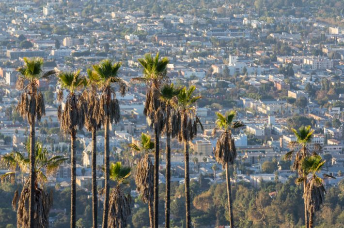 Hillside palms in Hollywood. Image - iStockphoto: Trek And Shoot