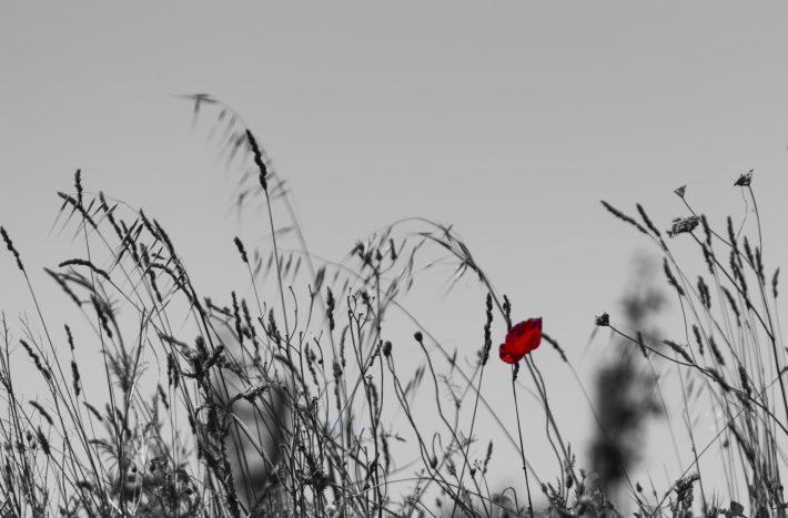 Image - iStockphoto: garnouille11